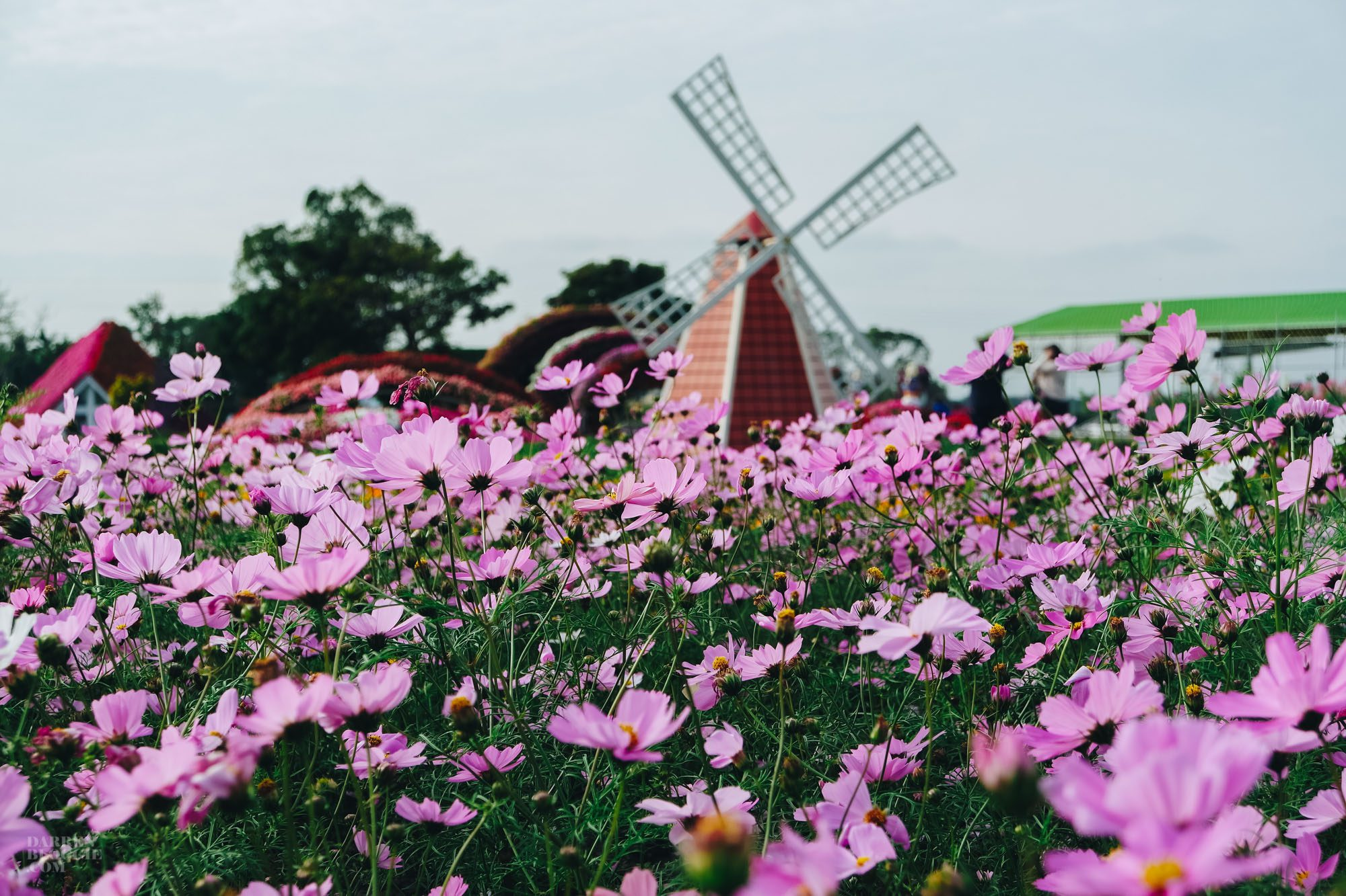 Places to Visit in Taichung - Xinshe Sea of Flowers 新社花海